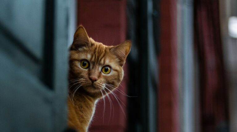a lucky cat peering in surprise